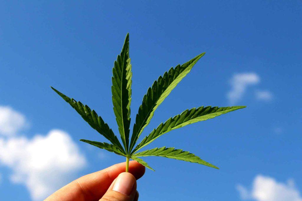 Cannabis Legalize Drugs #Drug liberalization #Cannabis