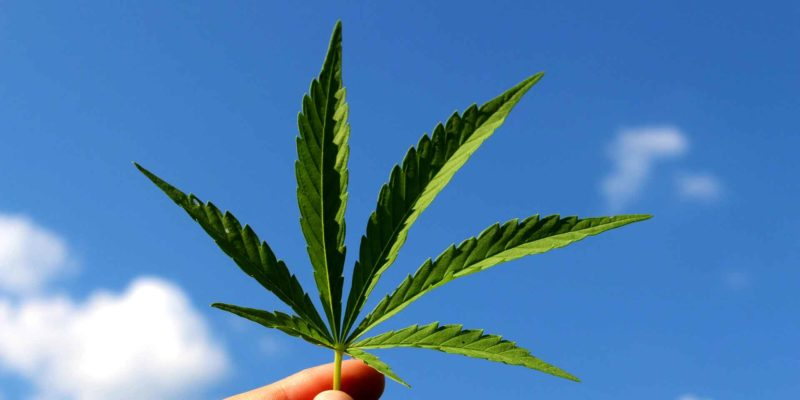 Cannabis Legalize Drugs #Drug liberalization #Cannabis