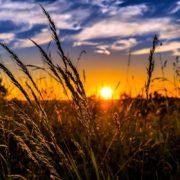 summer sunrise sunset agriculture