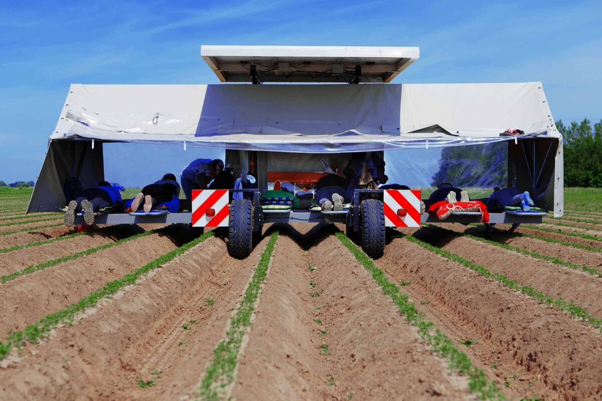 Agriculture - Harvesting employees working with a solar powered weeding machine