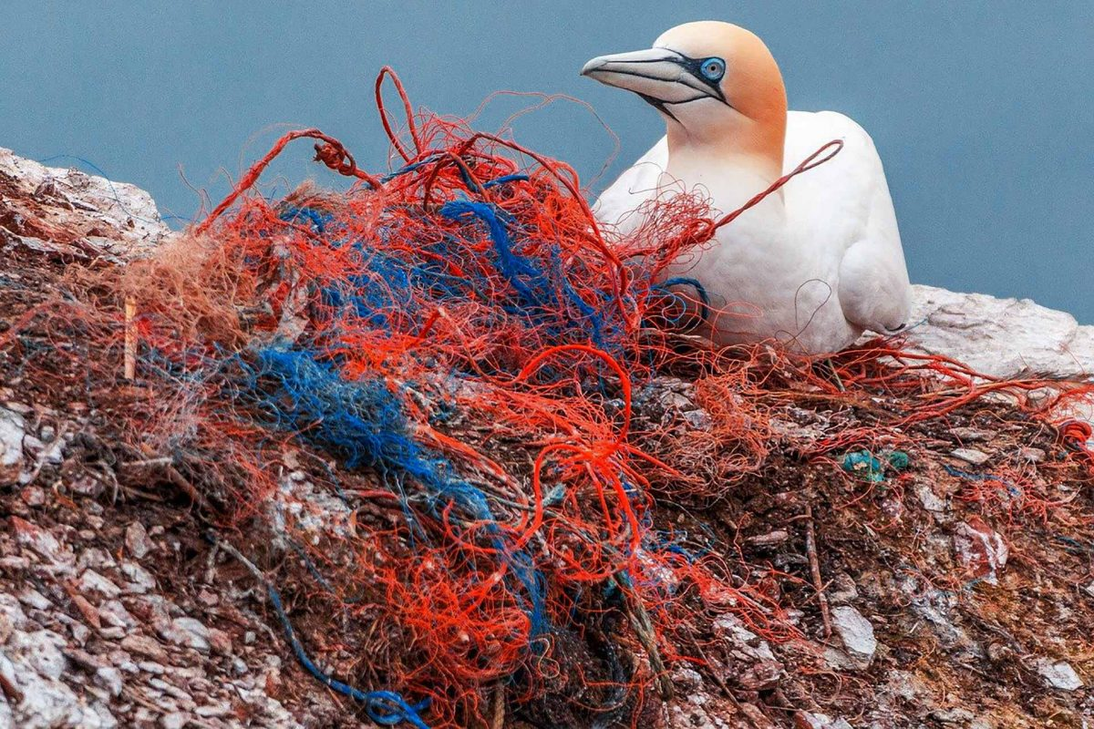 safety net plastic pollution